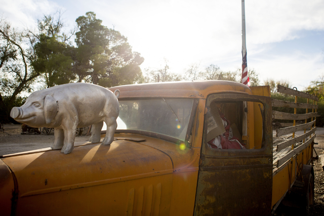 A pig statue sits on the hood of a truck on the property of RC Farms pig farm, Wednesday, Nov. 16, 2016, in North Las Vegas. Elizabeth Page Brumley/Las Vegas Review-Journal Follow @ELIPAGEPHOTO