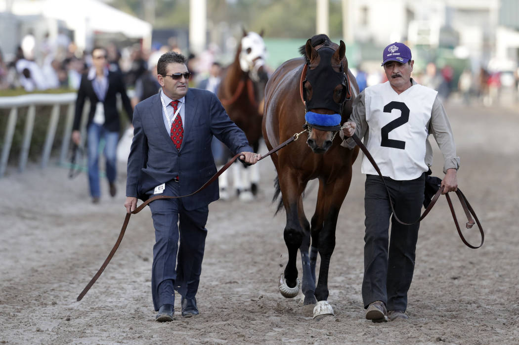 West Coast is led on the track for the 12th race at the Pegasus World Cup Invitational horse race, Saturday, Jan. 27, 2018, at Gulfstream Park in Hallandale Beach, Fla. (AP Photo/Lynne Sladky)