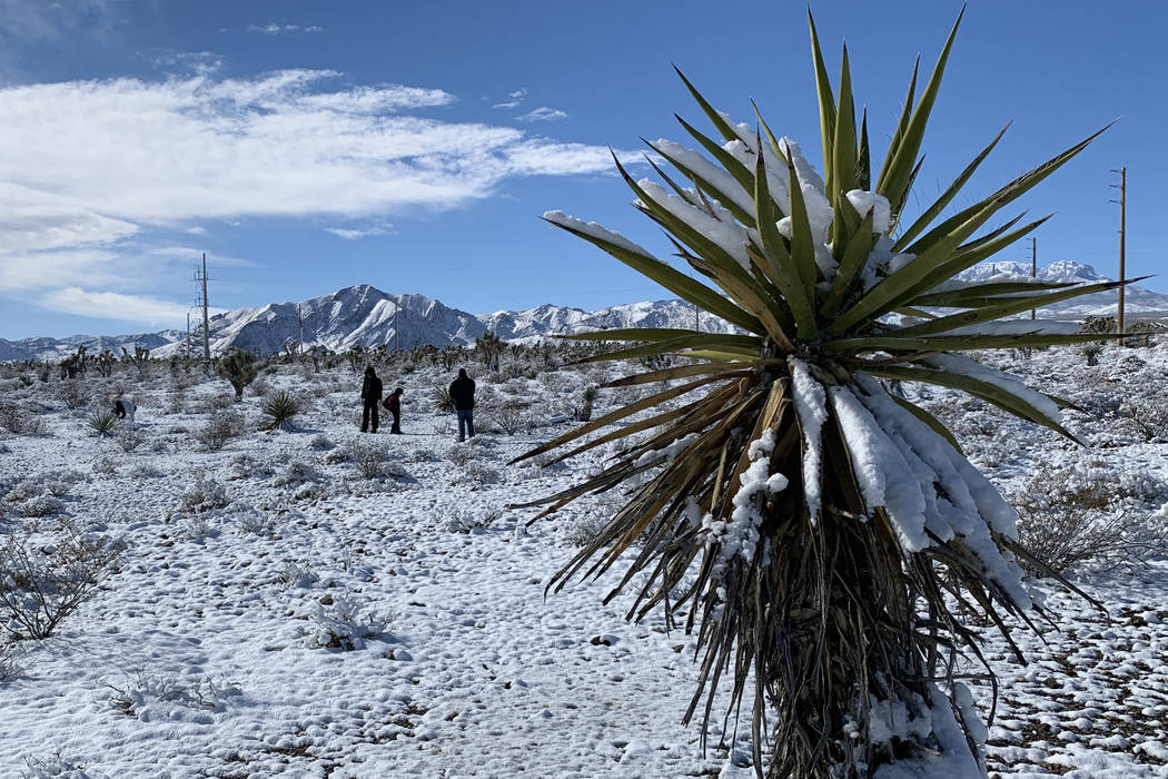 A dusting of snow covers the ground along Nevada State Route 156 (Lee Canyon Road) near US 95 outside Las Vegas on Monday, Feb. 18, 2019. Mount Charleston received nearly four inches of snow on Su ...
