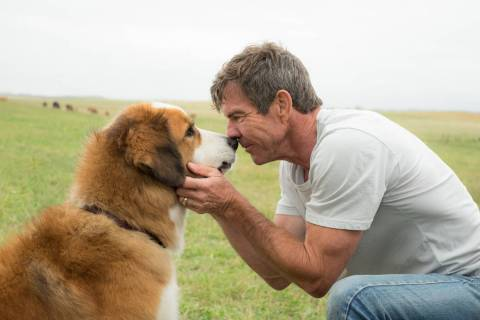 This image released by Universal Pictures shows Dennis Quaid with a dog, voiced by Josh Gad, in ...