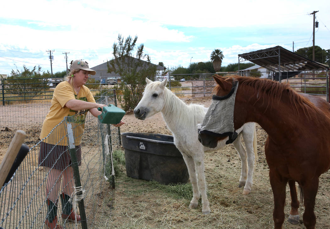 Susan Lorenz, 62, feeds her pony, Ziggy, as Jesse, right, looks on, at her Las Vegas home on Mo ...
