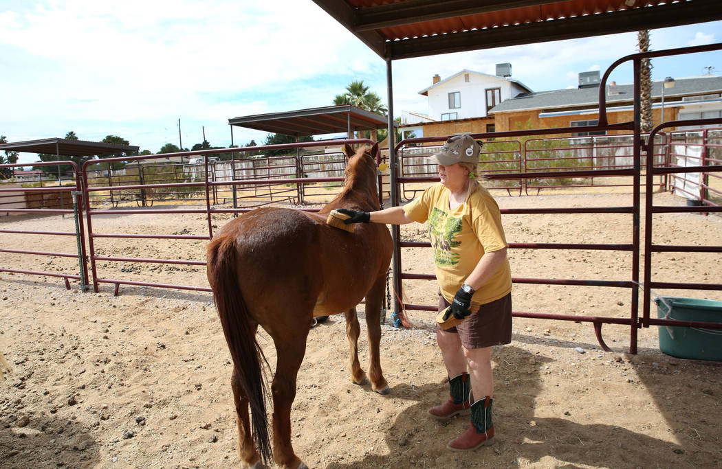 Susan Lorenz, 62, grooms her pony, Jesse, at her Las Vegas home on Monday, Sept. 23, 2019. (Biz ...