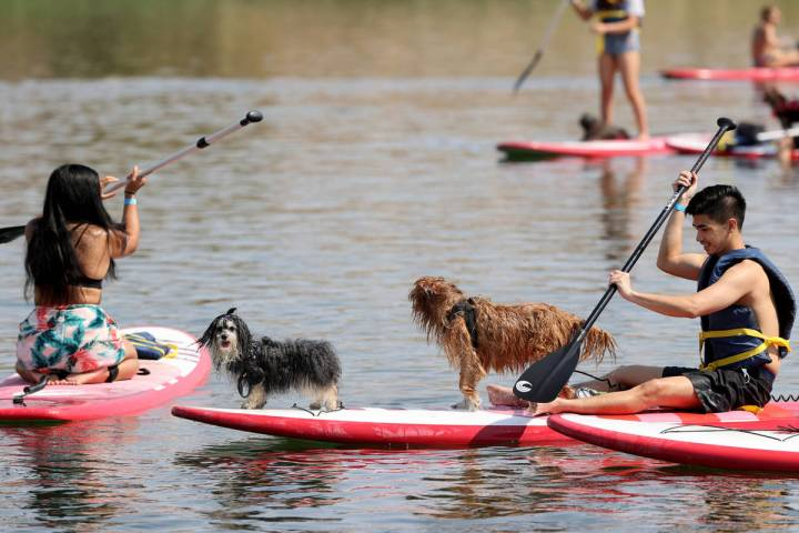 Dash Layson of Las Vegas paddleboards with his dogs Phoebe, left, and Macen during Bring Your D ...