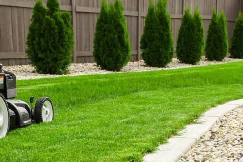 Hybrid fescue grass has a narrower blade and grows a little slower, which means it doesn't need ...