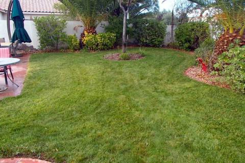 There are basically two types of lawns that determine when to plant: cool-season lawns, mostly ...