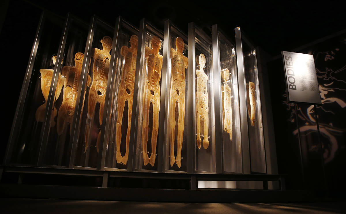 """A cross-section of human bodies are shown at """"Bodies ... The Exhibition"""" at Luxor. (Premier Exh ..."""