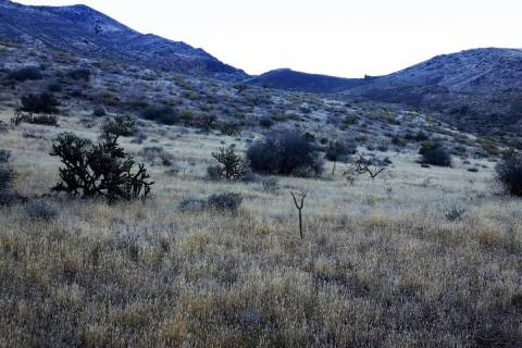 Grassy hillsides with brush-filled draws and steep slopes are a good place to start looking for ...