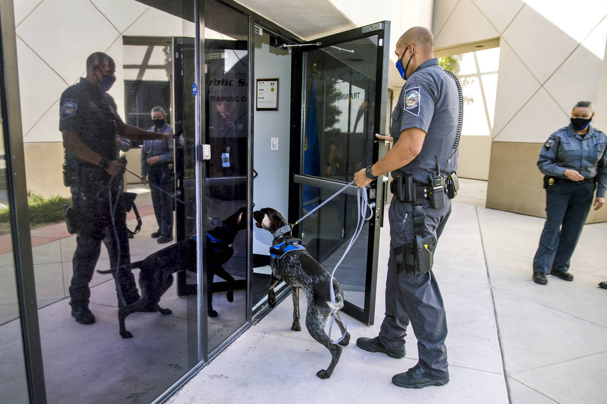 Nevada Highway Patrol Trooper Clifton Davis leads Skipper, a German Shorthaired Pointer, into t ...