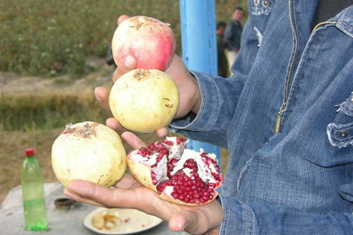 Not all pomegranates have the same seed color. Some pomegranate seeds are red and some off whit ...