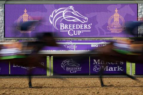 Horses pass a video board during a workout for the Breeders' Cup World Championship horse races ...