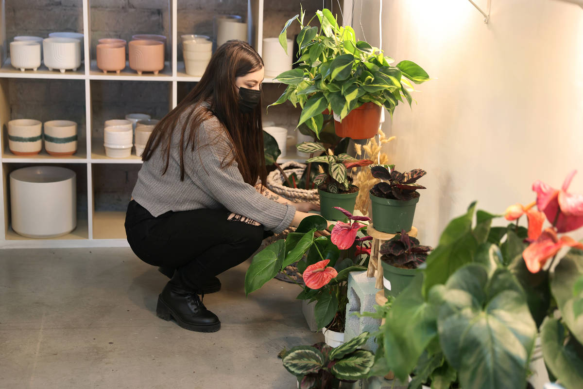 Carissa Beasley, owner of the LV Plant Collective store, moves a plant inside of her shop in La ...