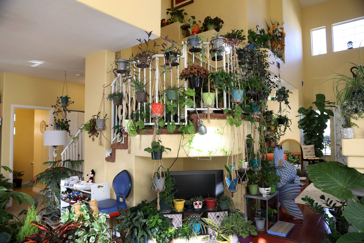 The home of plant enthusiast T.J. Dahna in Las Vegas on Thursday, Nov. 19, 2020. Dahna claims t ...