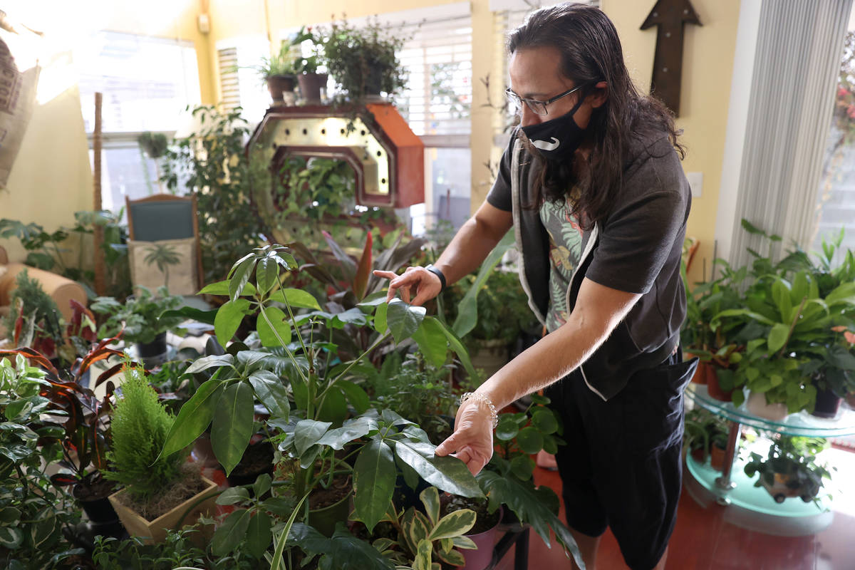 Plant enthusiast T.J. Dahna shows his collection of plants at his home in Las Vegas on Thursday ...