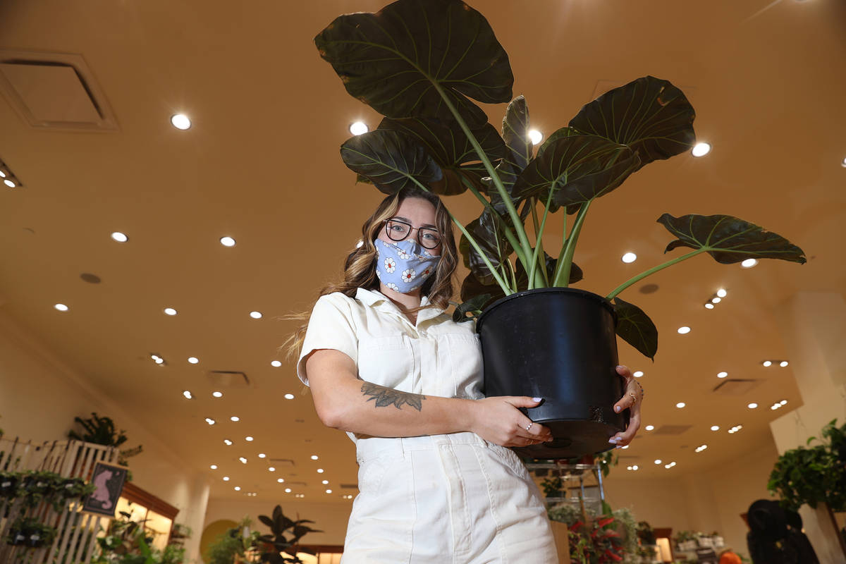 Brooklyn Martell, owner of Carrie Lynn's plant shop in Downtown Summerlin, poses for a portra ...