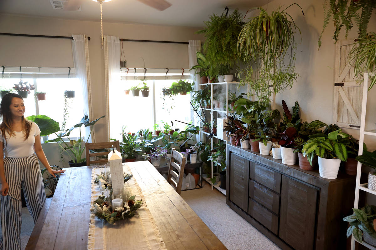 Plants decorate the dining room of plant enthusiast Clariselle Felias in Las Vegas on Thursday, ...