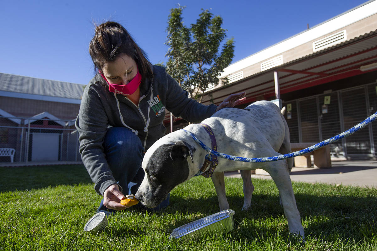 """Jen Freet, owner of Barx Parx, feeds 8-year-old Rocky a """"PUPSgiving"""" meal at City of Henderson ..."""
