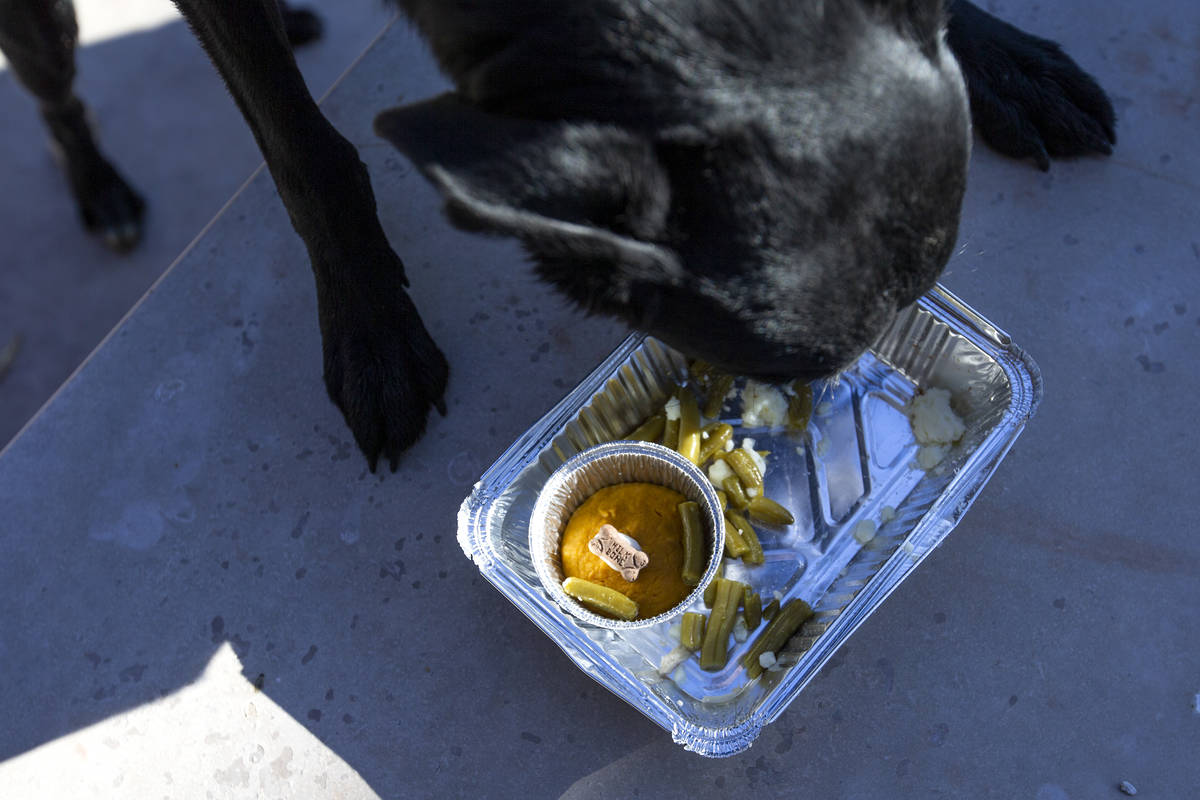 """Dooley, 3, enjoys a """"PUPSgiving"""" meal donated by Barx Parx at City of Henderson Animal Care and ..."""