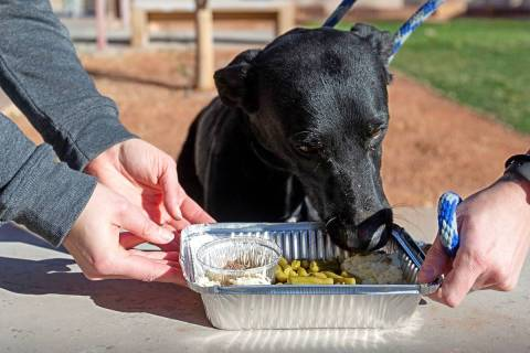 """3-year-old Dooley enjoys a """"PUPSgiving"""" meal donated by Barx Parx at City of Henderson Animal C ..."""