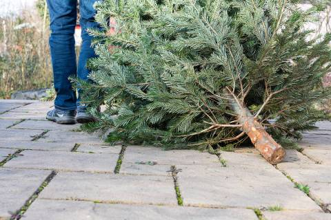 Summerlin residents can recycle their real Christmas tree Dec. 26-Jan. 15. The annual Christmas ...