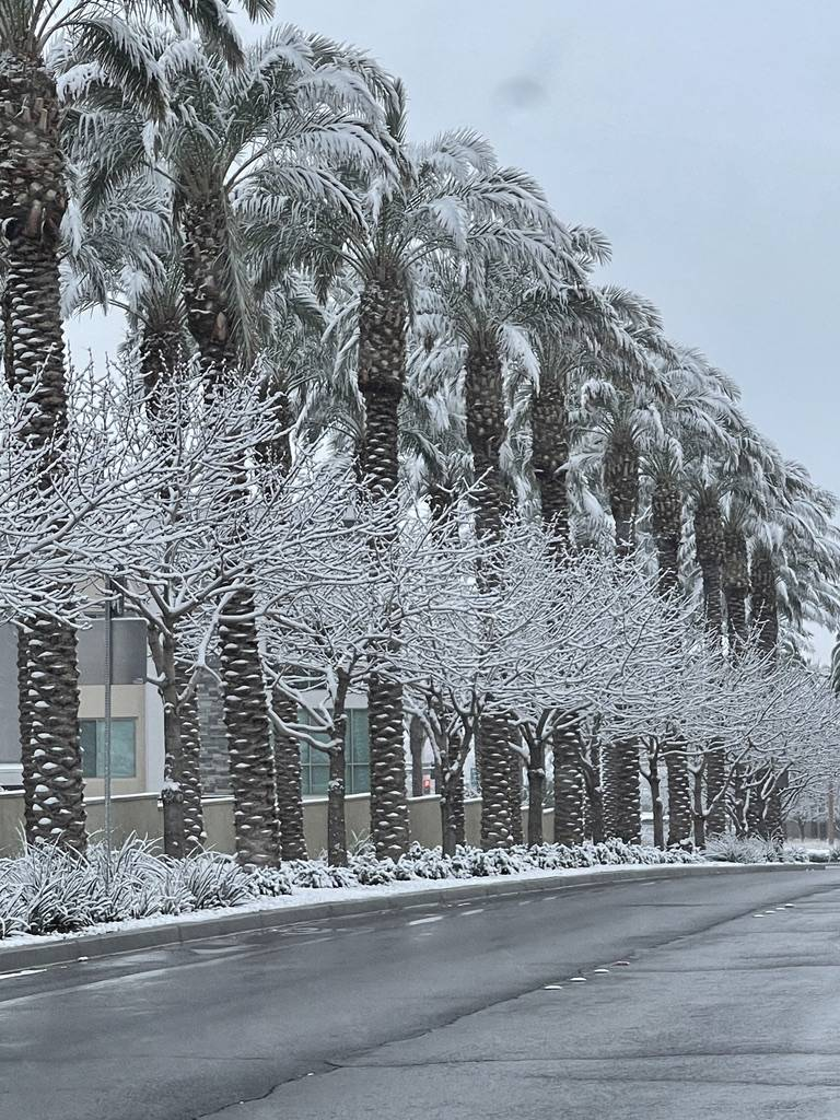Snow covers trees along Pavilion Center Drive in the Summerlin neighborhood early in the mornin ...