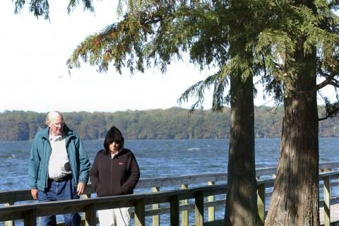 Homer and Elaine Tackett, of Monroe, Wis., look at some of the Cypress trees that grow at Reelf ...