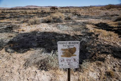 Clark County Wetlands Park in Las Vegas after a fire burned 25 percent of the park the previous ...