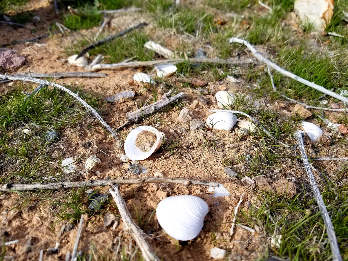 Clam shells and aluminum can pull-tabs are scattered in spots on the lakebed near the trail&#x2 ...