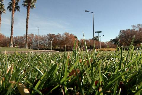 Grass covers the ground near a roundabout in Summerlin on Wednesday, December 12, 2018. (Michae ...