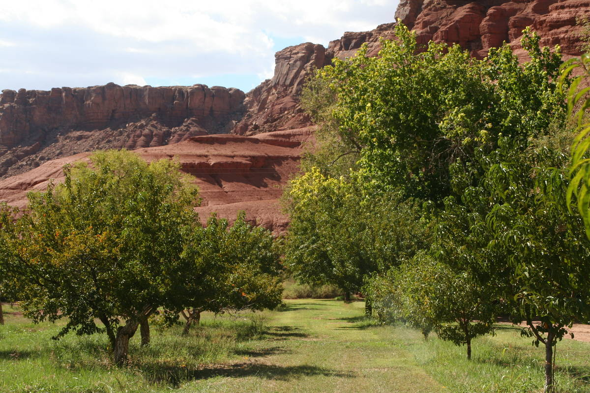 The orchards at Lonely Dell Historic Ranch. (Deborah Wall/Las Vegas Review-Journal)