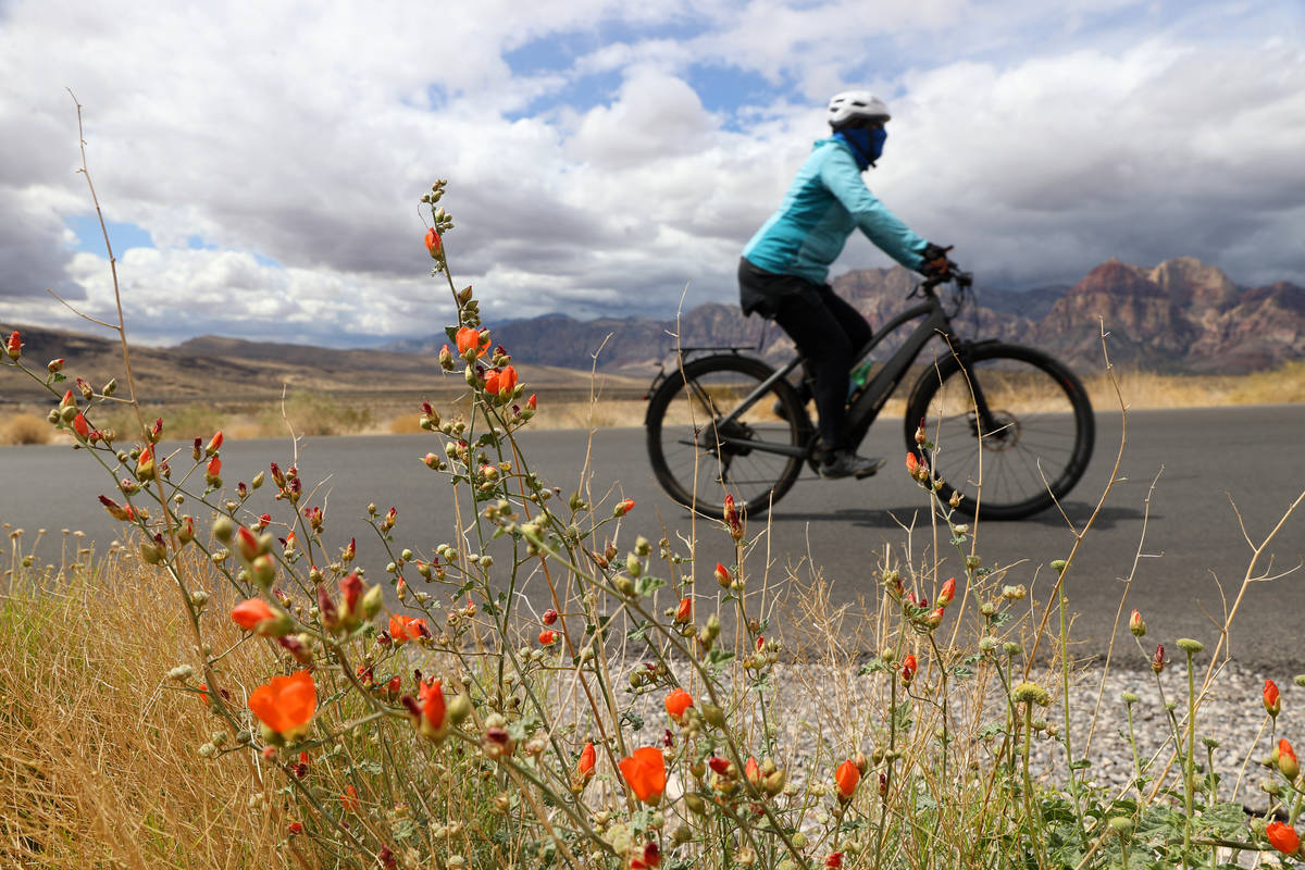Wildflowers grow along the Red Rock Canyon Scenic Loop in Las Vegas, Tuesday, April 27, 2021. ( ...