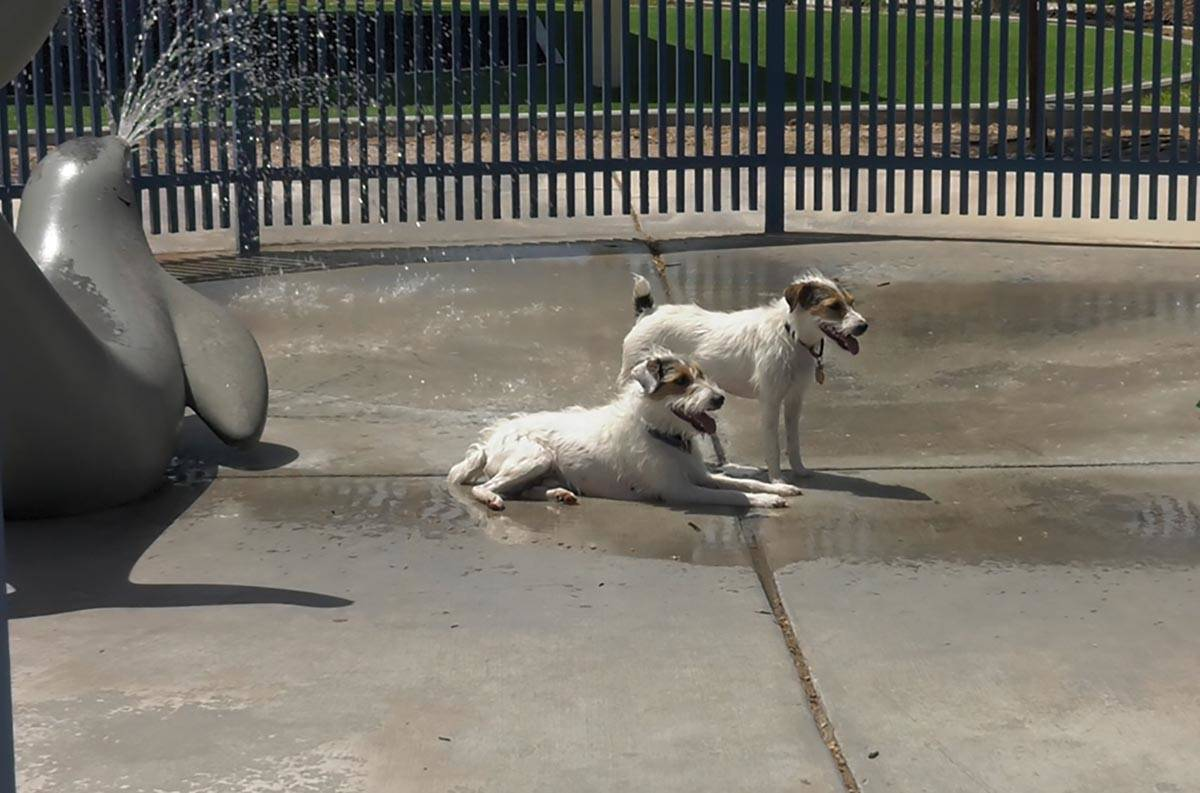 Dogs lay out inside the splash pad at Woofter Family Park on Sunday, May 2, 2021. (Elliot Bauma ...