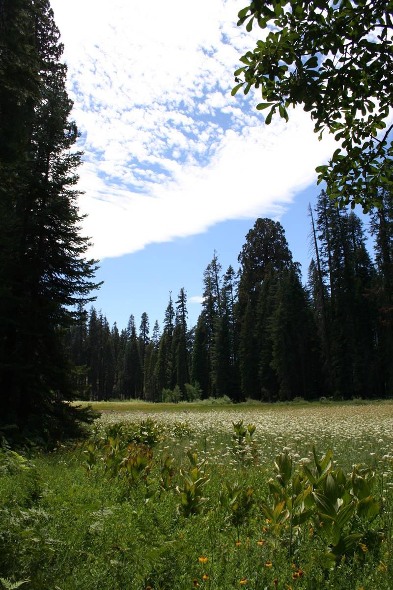 "John Muir called Crescent Meadow ""The Gem of the Sierra."" (Deborah Wall Las Vegas Review-Jo ..."