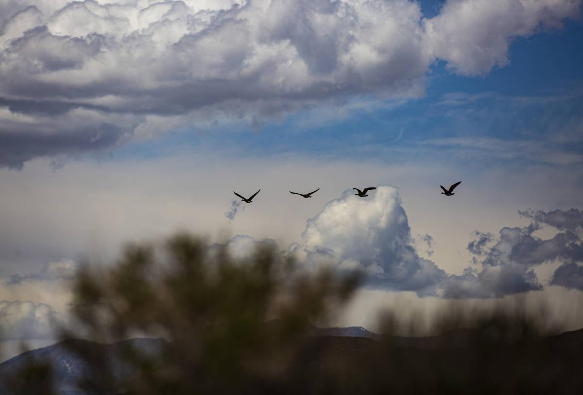 Birds fly around the Wayne E. Kirch Wildlife Management Area along the Basin & Range trail ...