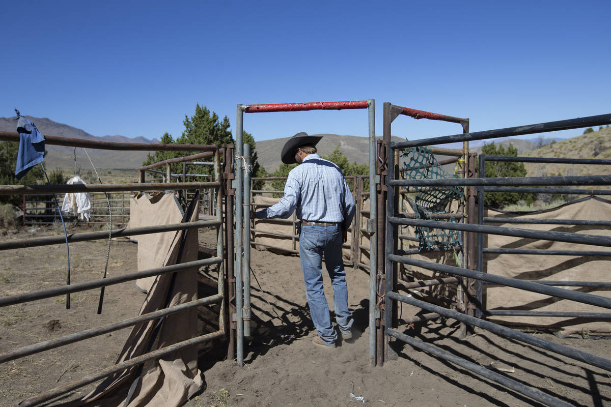 Wild Horse and Burro Specialist Ben Noyes walks into the wild horse trap after a day of gatheri ...