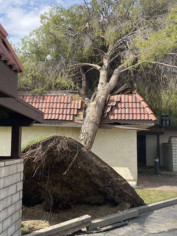 A tree is uprooted after overnight storms in Pahrump, Monday, July 26, 2021. (Nye County/Twitter)
