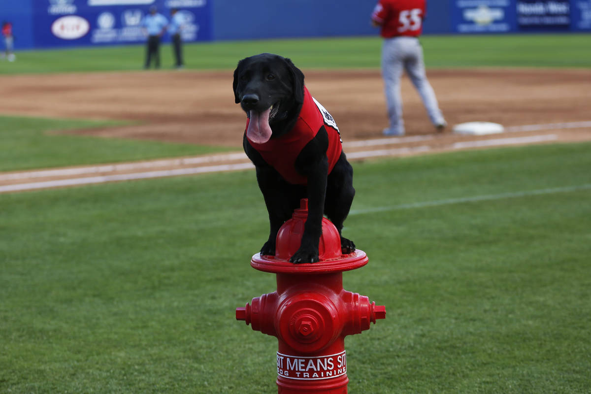 Las Vegas 51s bat dog Finn waits for a command during a game against the Albuquerque Isotopes a ...
