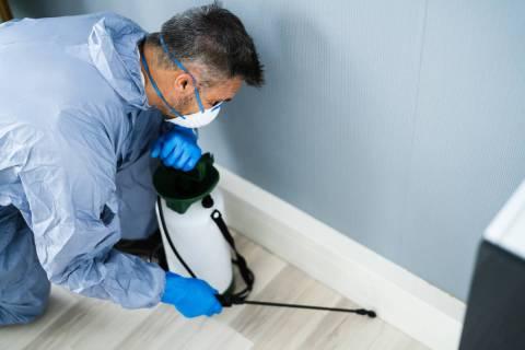 A pest control exterminator sprays pesticide inside a house. Servicing the home regularly throu ...