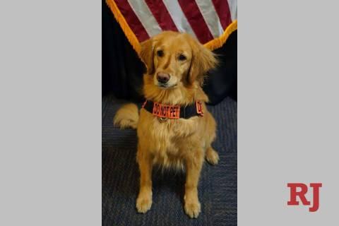 Alona was named the TSA's Cutest Canine. (TSA)
