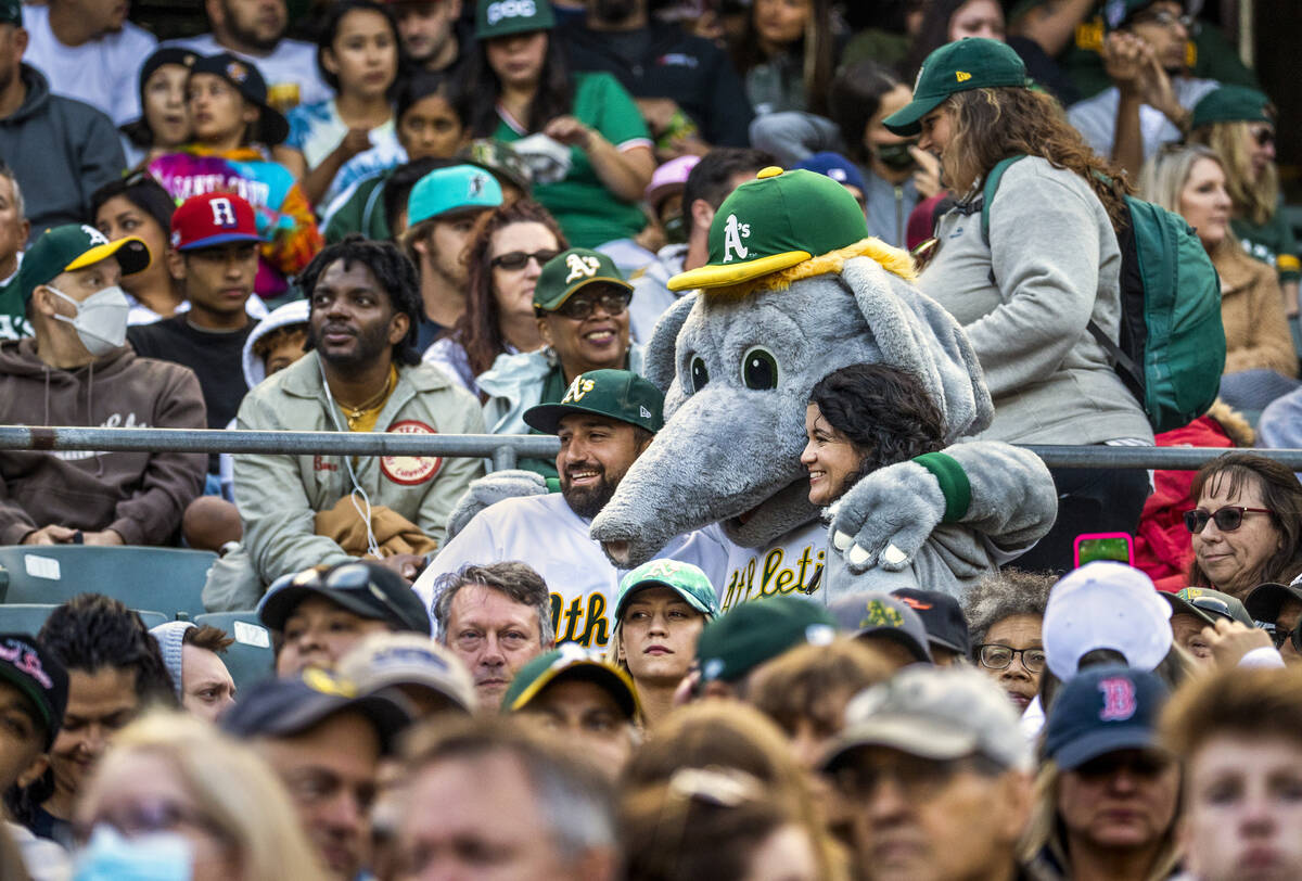 Oakland A's mascot Stomper joins fans for a photo in the stands as they play the Boston Red Sox ...