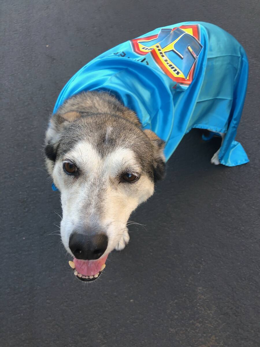 Cadet, a former Iditarod Trail Sled Dog Race competitor, will run in Saturday's Candlelighters ...