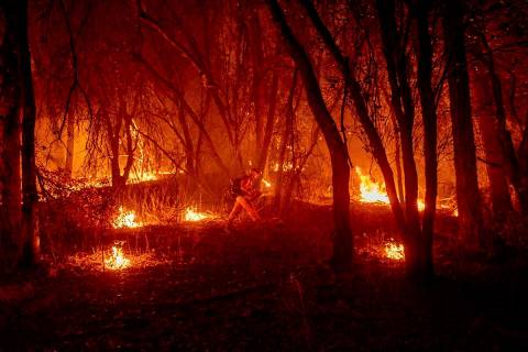 An inmate firefighter from the Trinity River Conservation Camp uses a drip torch to slow the Fa ...
